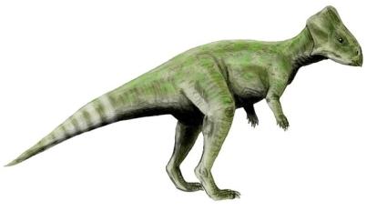 Graciliceratops