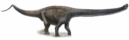 Yuanmousaurus